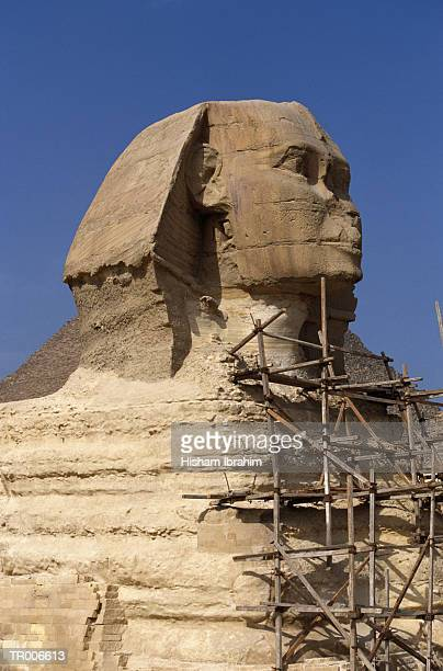 Sphinx with Scaffold
