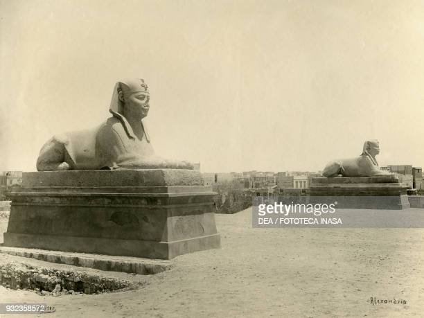 Sphinxes at Pompey's pillar Alexandria Egypt photograph by Andreas Reiser ca 1890