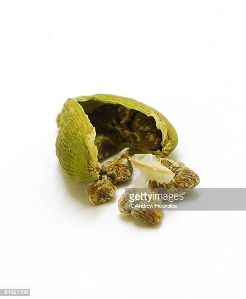 Spice - A broken open Green Cardamom Pod