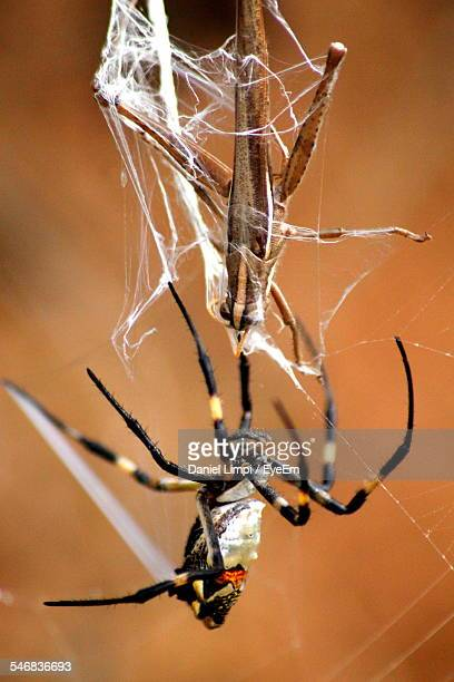 Spider And Insect In Spider Web