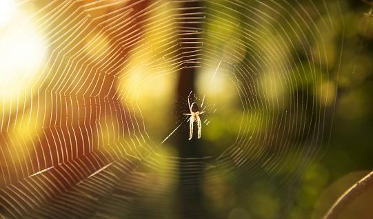spider autumn forest 1057338424