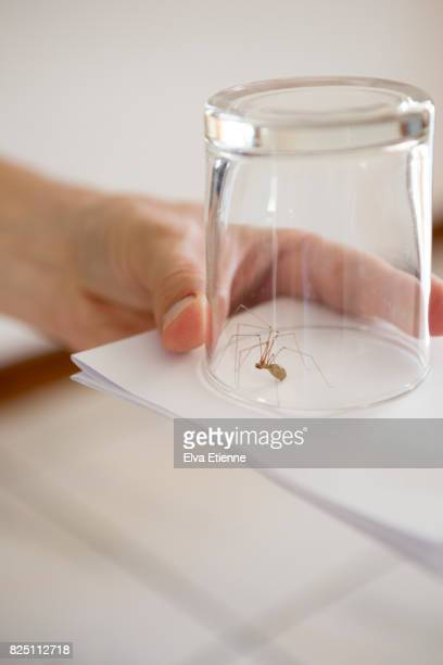 Spider caught in drinking glass