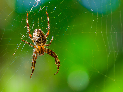 Spider close-up on a green background. 873031216