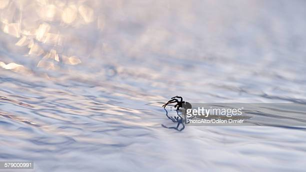 spider floating on debris in water - the four elements stock pictures, royalty-free photos & images