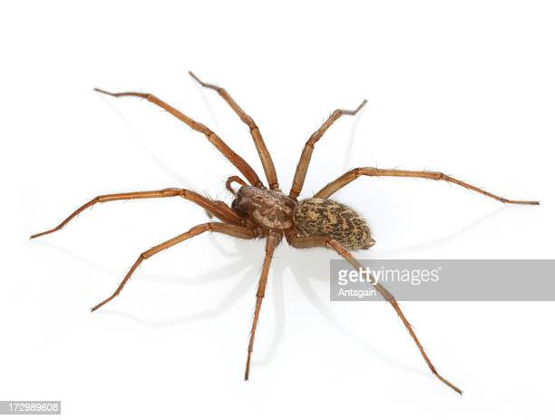spider  from cellar
