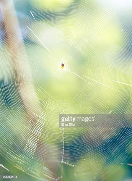 A spider in a cobweb.