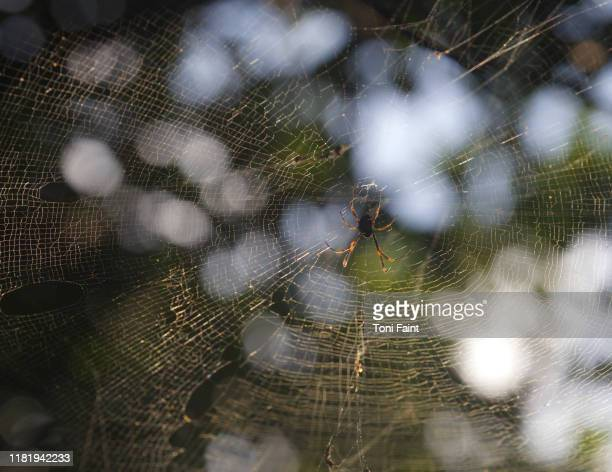 a spider in a web outdoors - ugly spiders stock photos and pictures