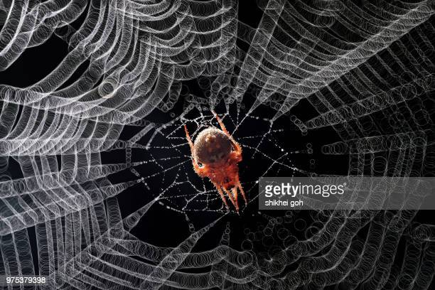 A spider in a web.