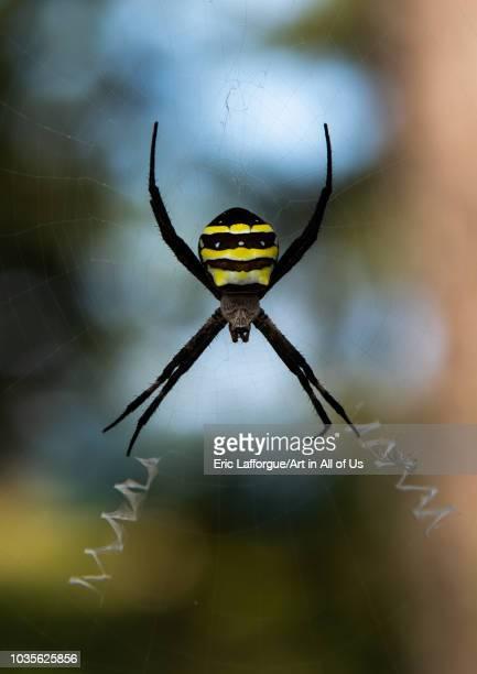 Spider in Amanohashidate Kyoto Prefecture Miyazu Japan on August 11 2018 in Miyazu Japan