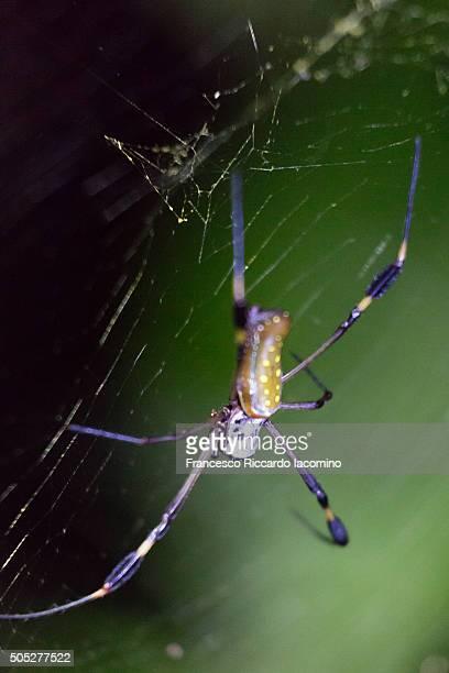 spider in costa rica - iacomino costa rica foto e immagini stock