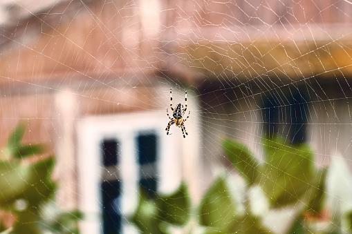 Spider in his cobweb 612630690