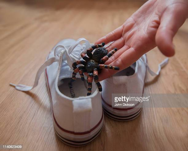 spider in shoe - misbehaviour stock pictures, royalty-free photos & images