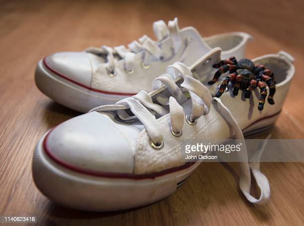 spider in shoe - april fools day stock pictures, royalty-free photos & images