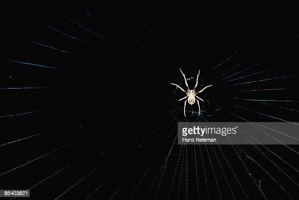 Spider in web with black back ground