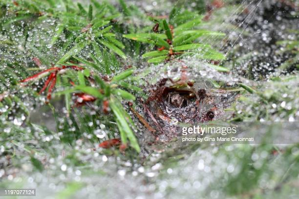 spider in web with dew and mist - nikko city stock pictures, royalty-free photos & images