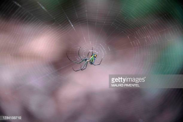 Spider is seen at the nursery garden of Brazilian landscape architect Roberto Burle Marx Site in Rio de Janeiro, Brazil on July 21, 2021. - The Burle...