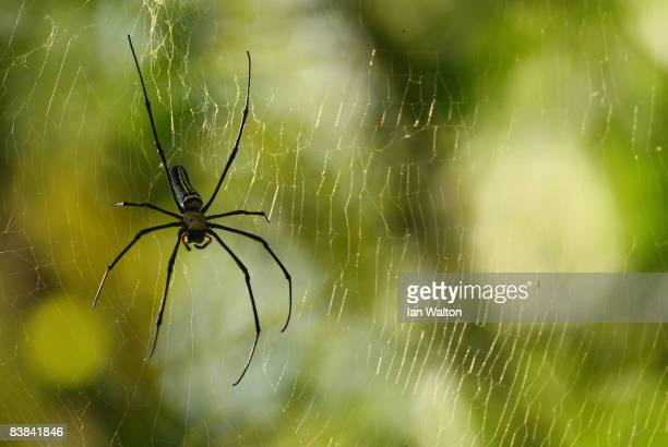 A spider is seen next to the 3rd green during round one of the Omega Mission Hills World Cup at the Mission Hills Resort on 27 November 2008 in...