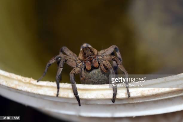 spider mother-i - filho bildbanksfoton och bilder