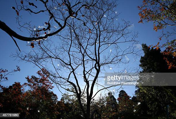 Spider nests appear on autumn leaves fallen tree on October 24 2014 in Asago Japan According to Japanese weather forecasting company Weather News due...