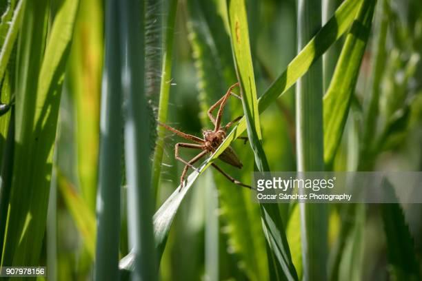 Spider on green grass
