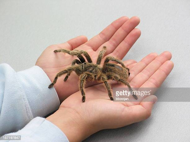spider on hand - ugly spiders stock photos and pictures