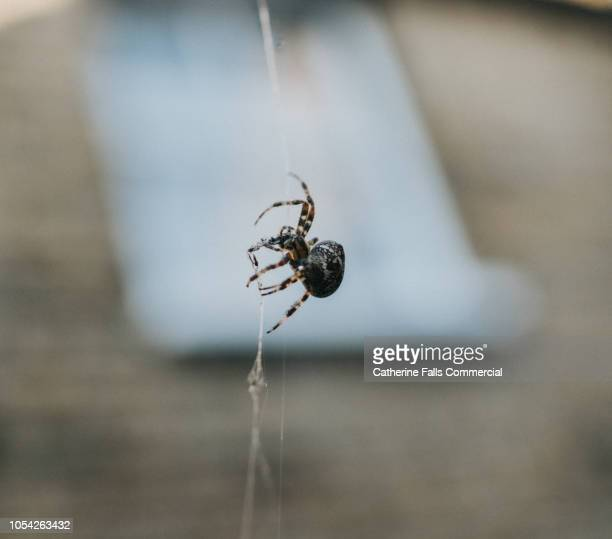 spider on her web - spider stock pictures, royalty-free photos & images