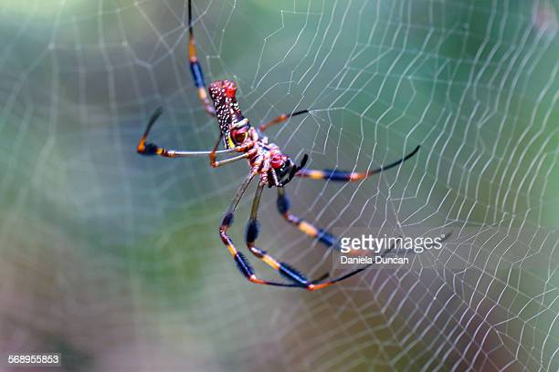 Spider on her web