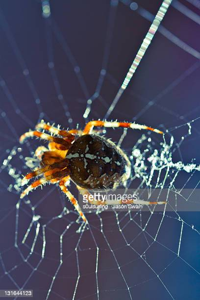 spider on spider web - s0ulsurfing stock pictures, royalty-free photos & images