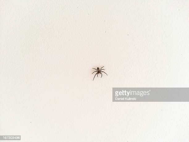 spider on the wall - spider stock pictures, royalty-free photos & images