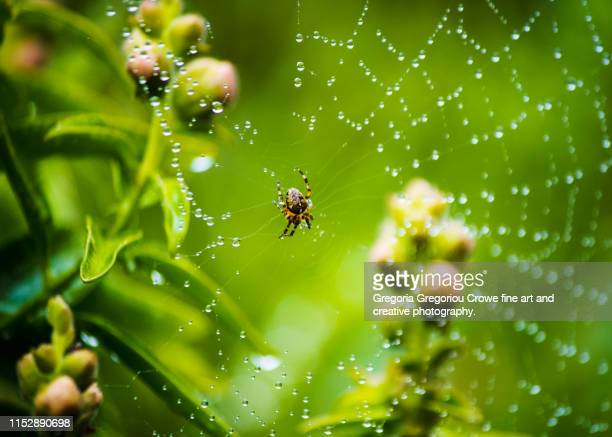 spider on web - gregoria gregoriou crowe fine art and creative photography. stock pictures, royalty-free photos & images
