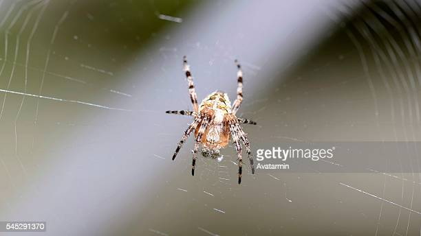 spider on web - natur stock pictures, royalty-free photos & images
