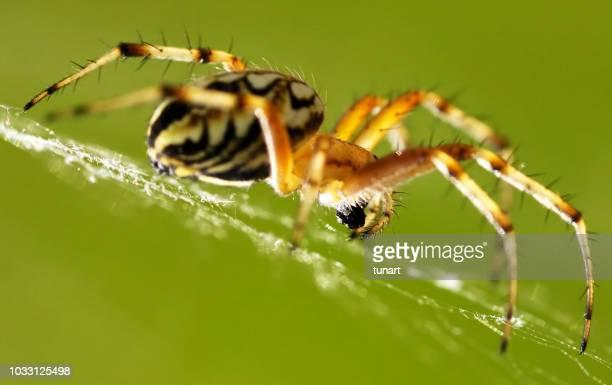 spider - aranha imagens e fotografias de stock