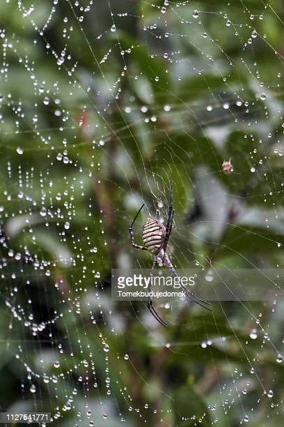 spider - colors soundtrack stock pictures, royalty-free photos & images