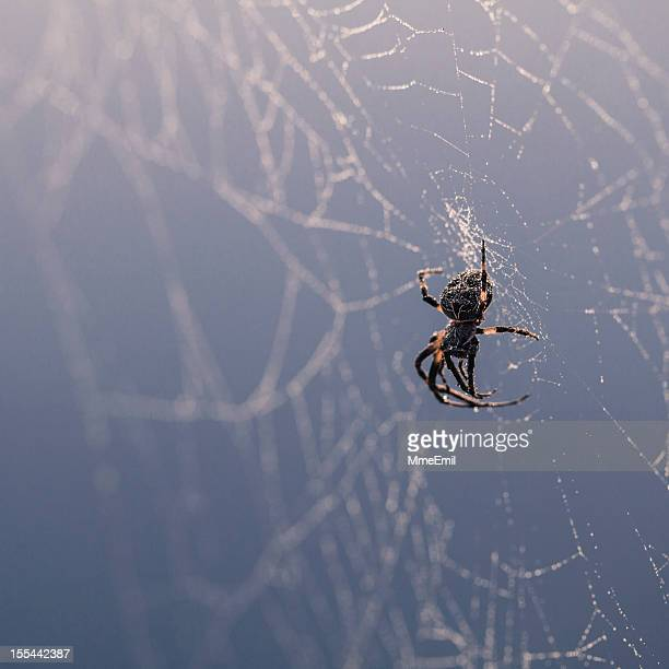 spider - ugly spiders stock photos and pictures