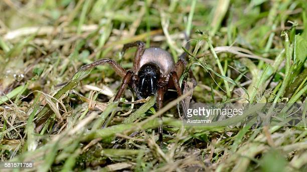 spider - natur stock pictures, royalty-free photos & images
