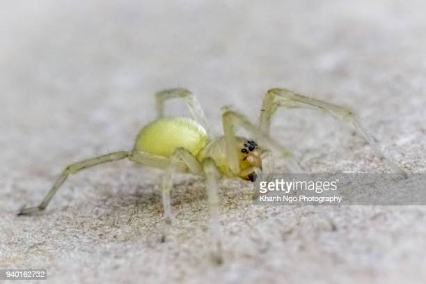 a spider - arthropod stock pictures, royalty-free photos & images