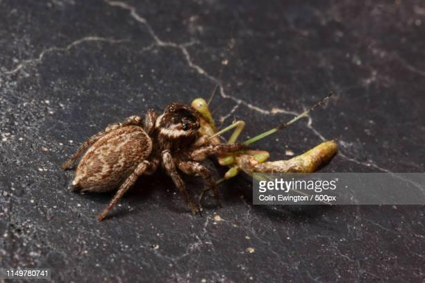 spider & prey - aranha imagens e fotografias de stock