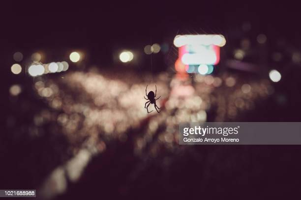 A spider rests on its net as the last athletes arrive to the finish line of the Ironman Kalmar on August 18 2018 in Kalmar Sweden