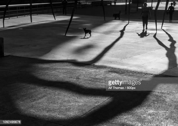 Spider Shadows