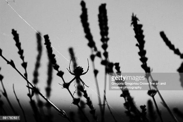 spider silhouette - gregoria gregoriou crowe fine art and creative photography. stock pictures, royalty-free photos & images