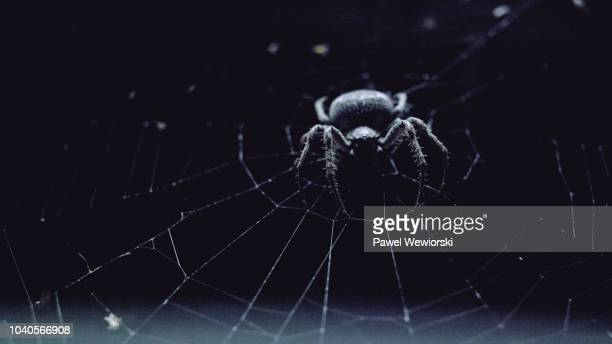 spider sitting on web at night - spider stock pictures, royalty-free photos & images