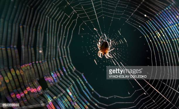 A spider spins a web in the village of Gornaya Mayevka some 30 km from Bishkek on July 8 2018