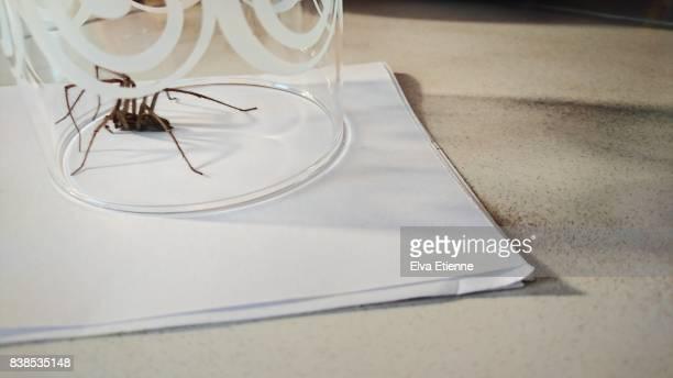 spider trapped in a drinking glass - spider fotografías e imágenes de stock