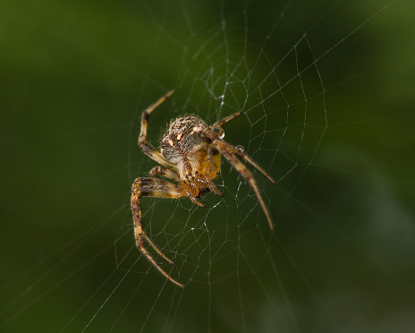 Spider waiting for the next prey 1012746364