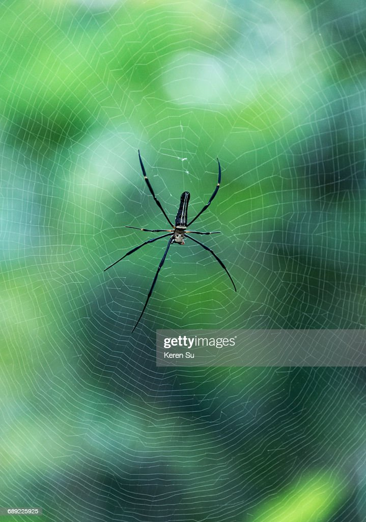 Spider weaving web : Stock Photo