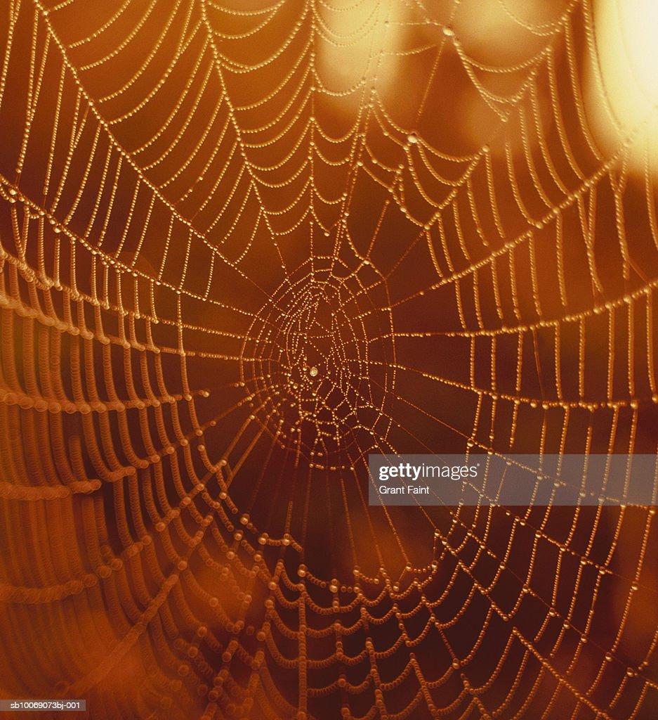 Spider web at dawn, close up : Stockfoto