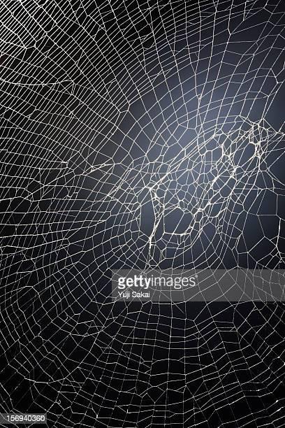 spider web close up