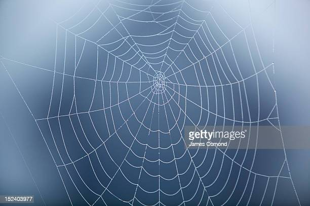 spider web covered in morning dew. - ragnatela foto e immagini stock