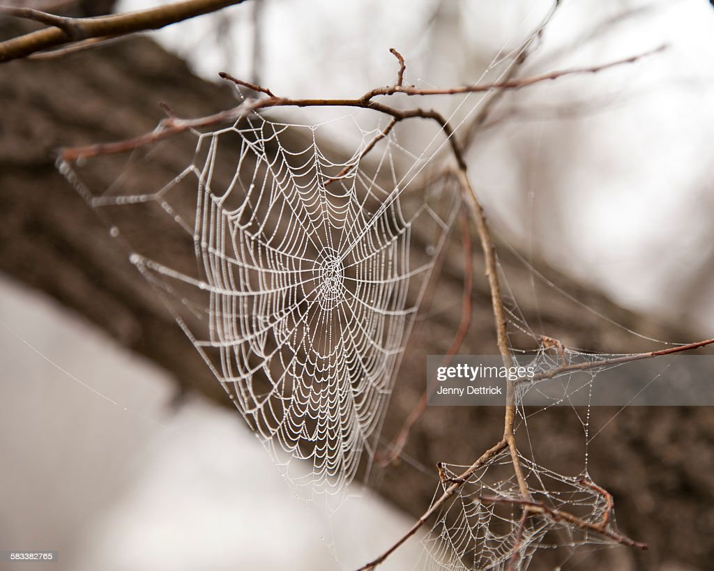 Spider web covered in morning dew : Stock Photo