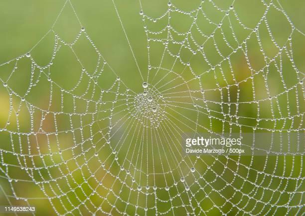spider web - geometria fotografías e imágenes de stock